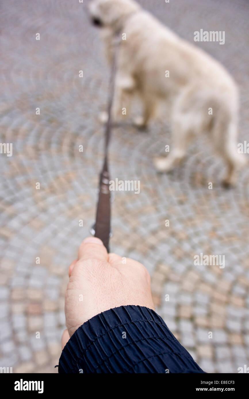 Man Walking the Dog, POV del hombre sujetando el látigo Foto de stock