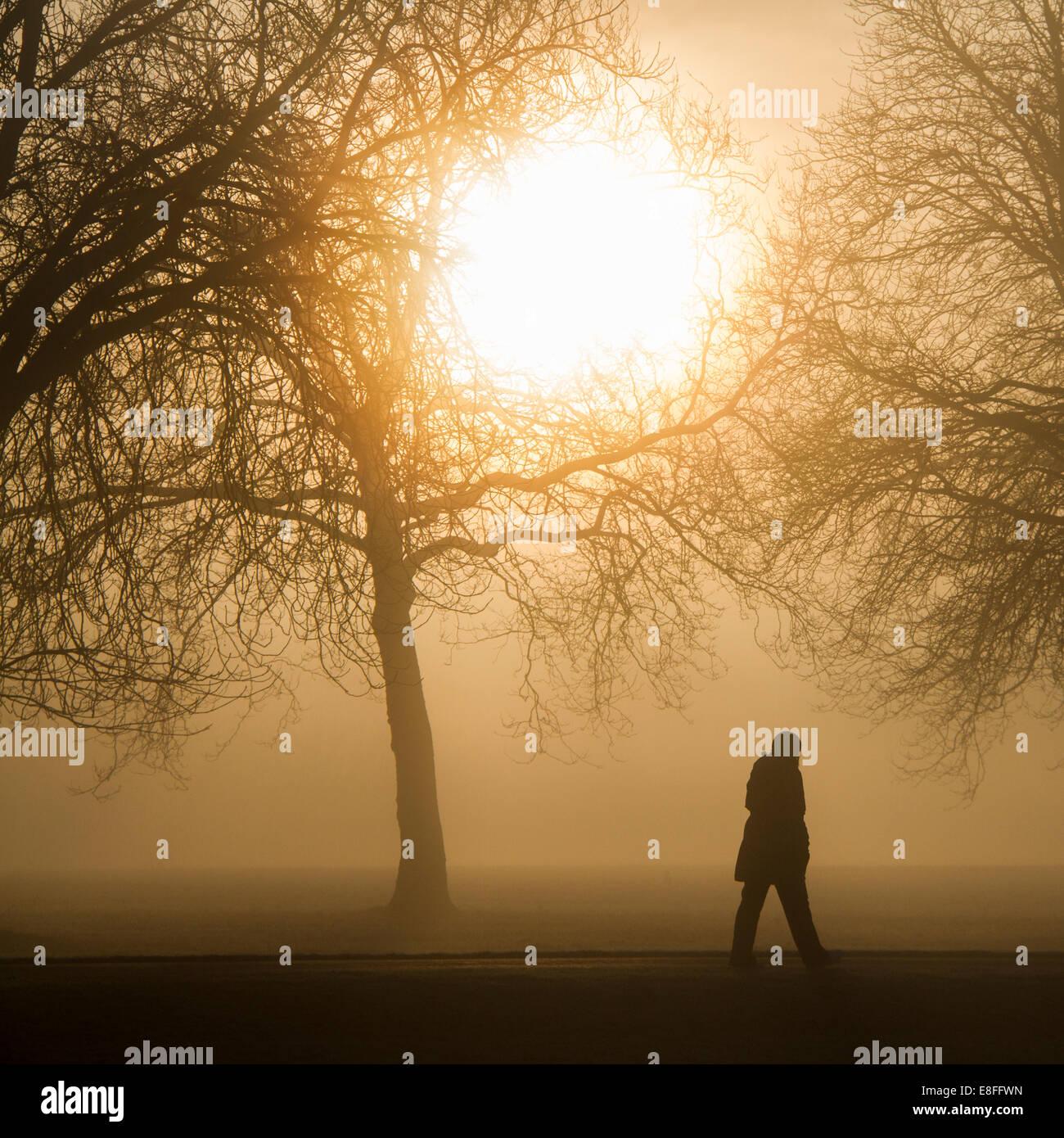 Silueta de una persona caminando a través del parque al amanecer, Berkshire, Inglaterra, Reino Unido. Imagen De Stock