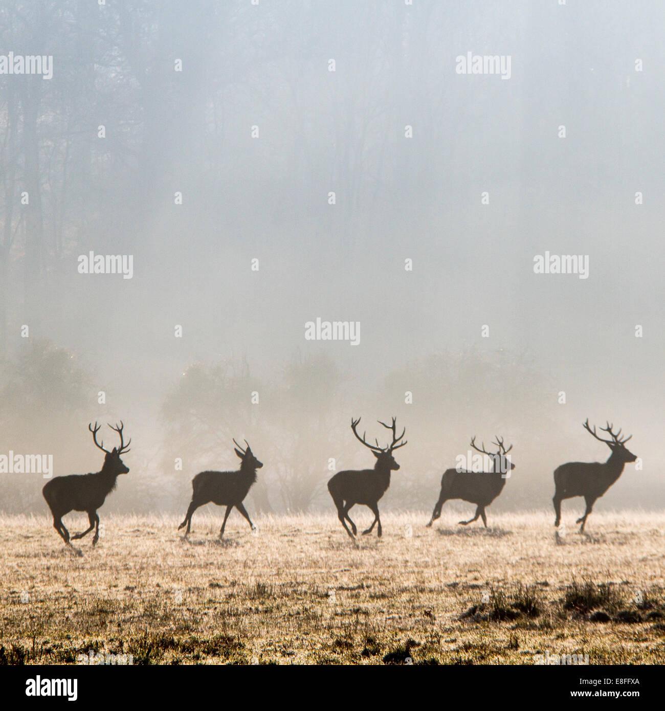 Fila de Deer Park, ejecuta en Berkshire, Inglaterra, Reino Unido. Imagen De Stock