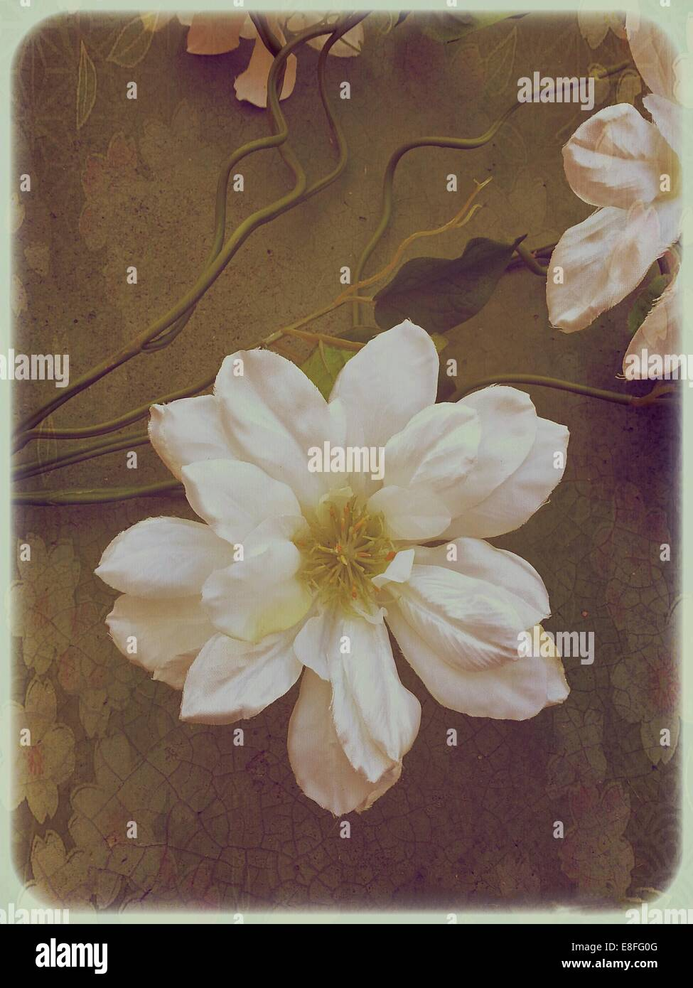 Flores blancas sobre fondo florido Imagen De Stock