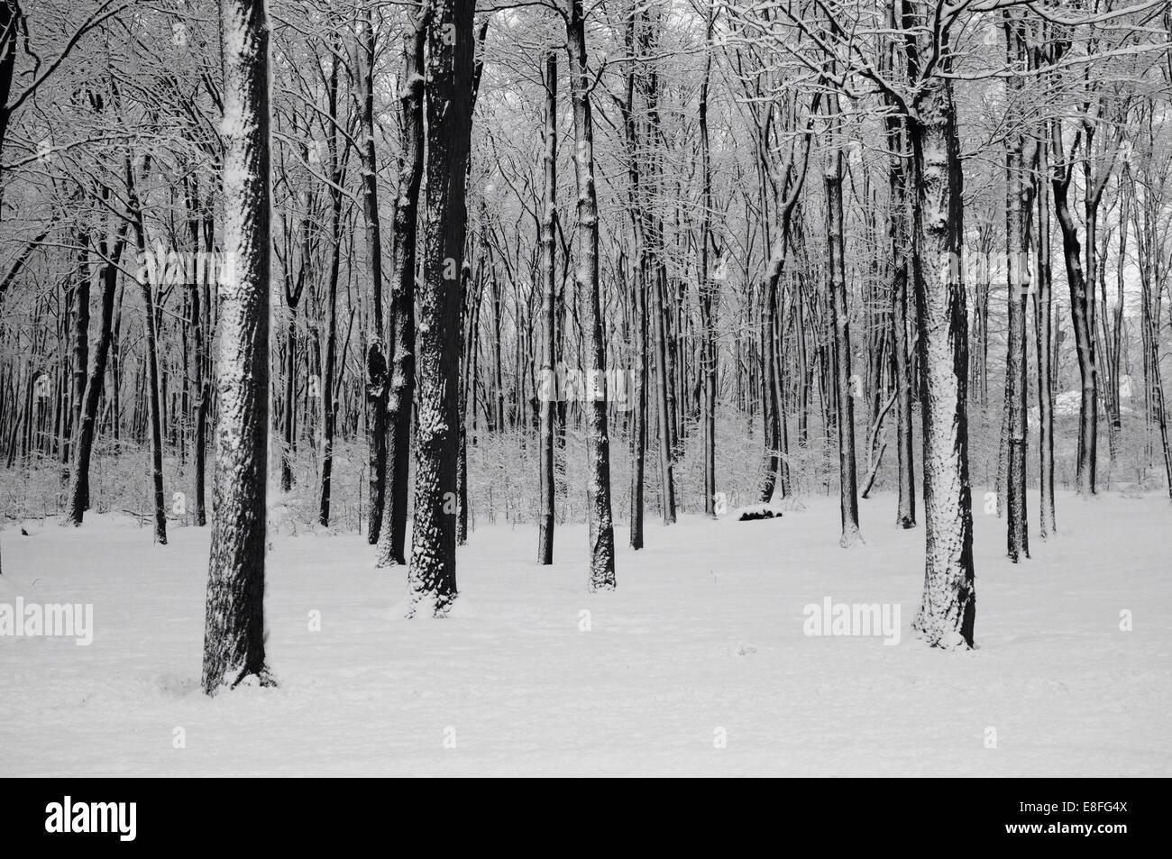 Bosque en invierno Foto de stock