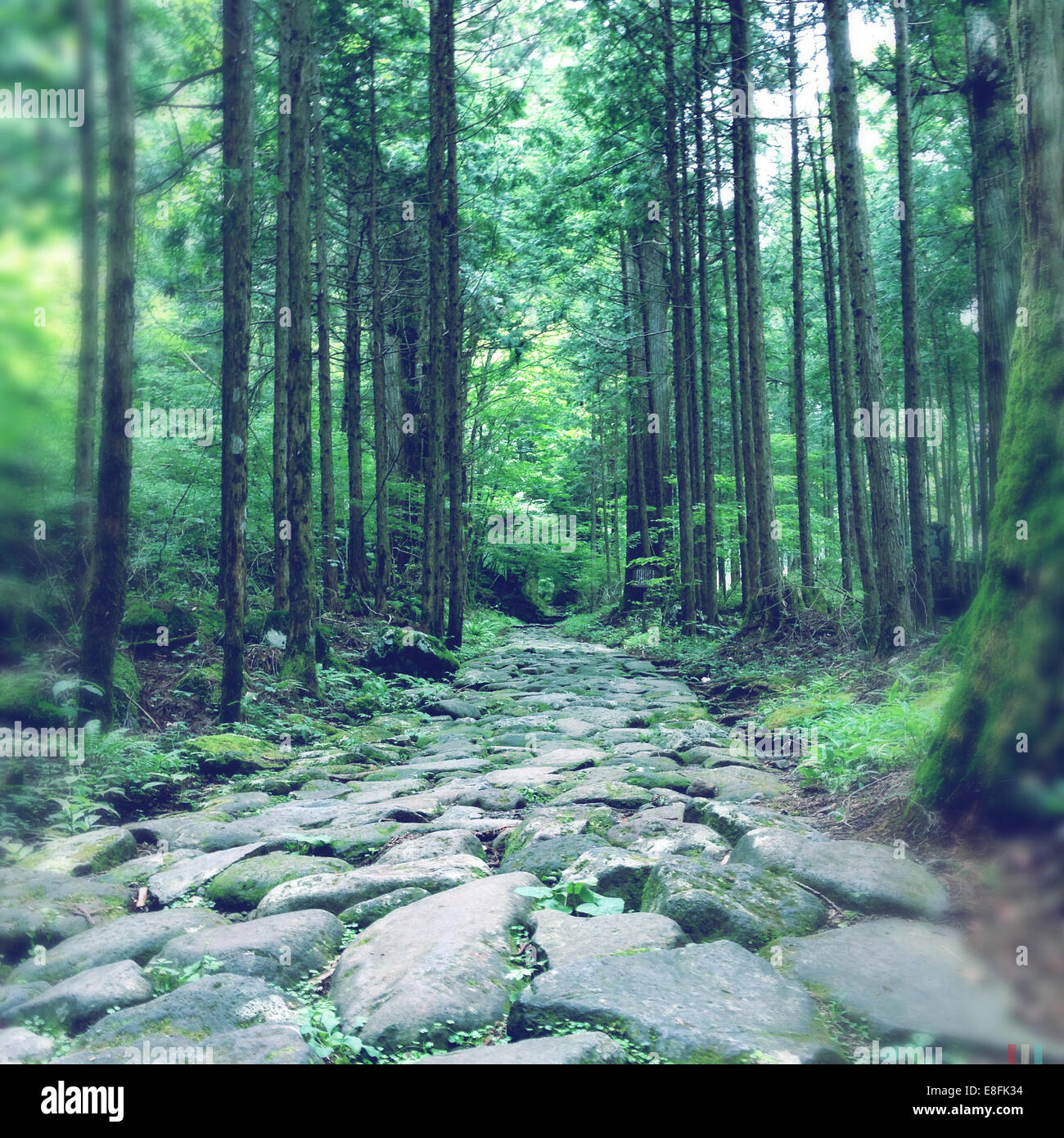 Sendero del bosque Imagen De Stock