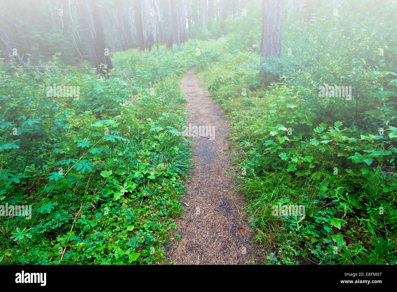 Vía a través de bosque nebuloso Imagen De Stock