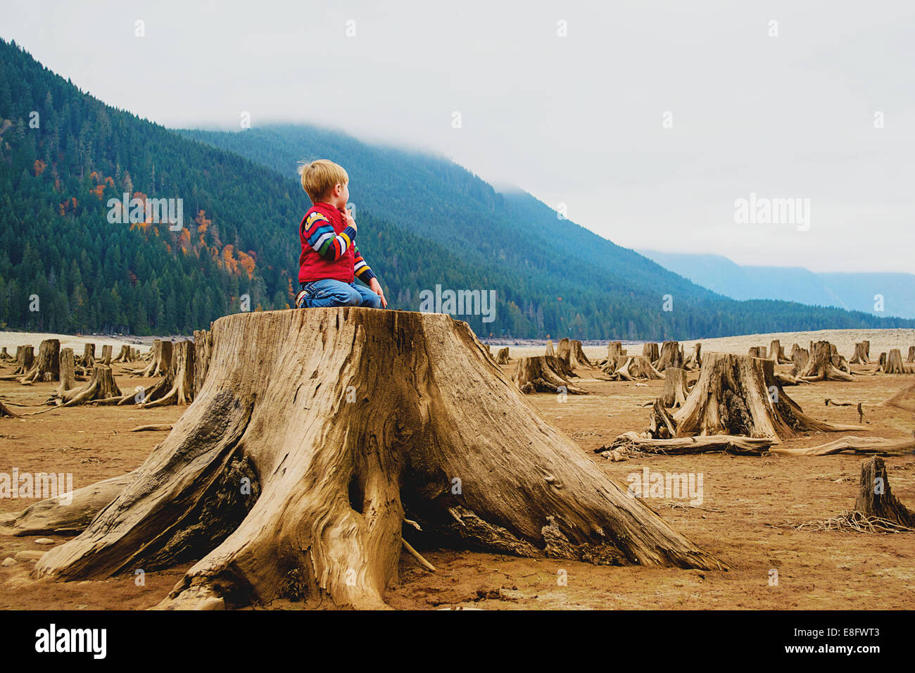 Boy (4-5) se arrodilla sobre tocón de árbol Imagen De Stock