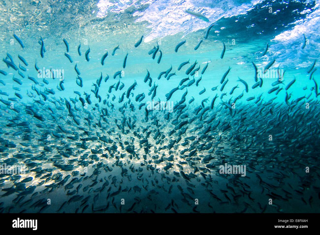 Escuela de peces bajo el agua Imagen De Stock