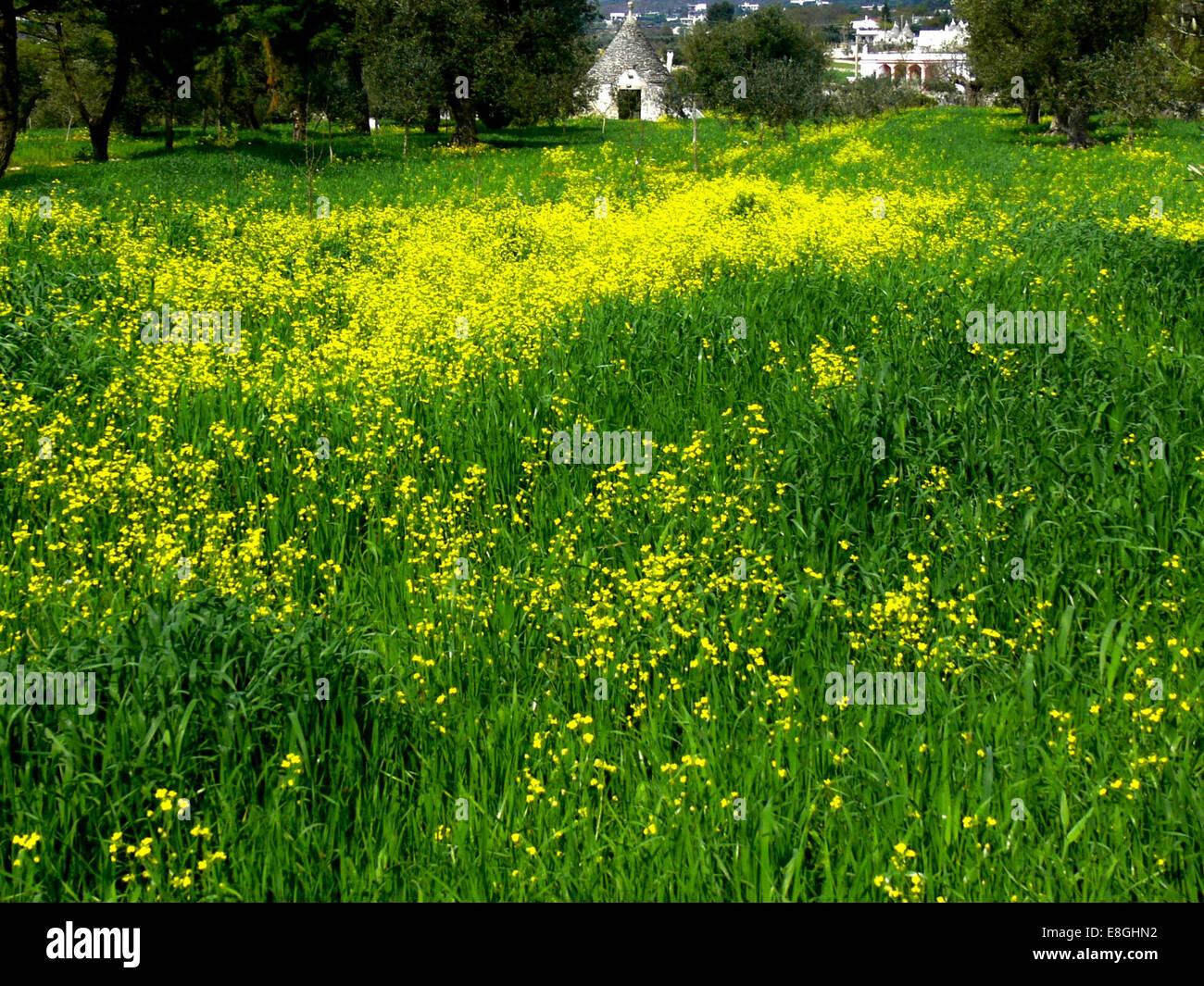 Italia, la imagen de la primavera Imagen De Stock