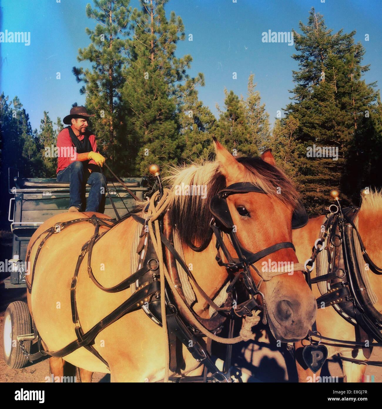 Cowboy sentado en carruaje tirado por caballos Foto de stock
