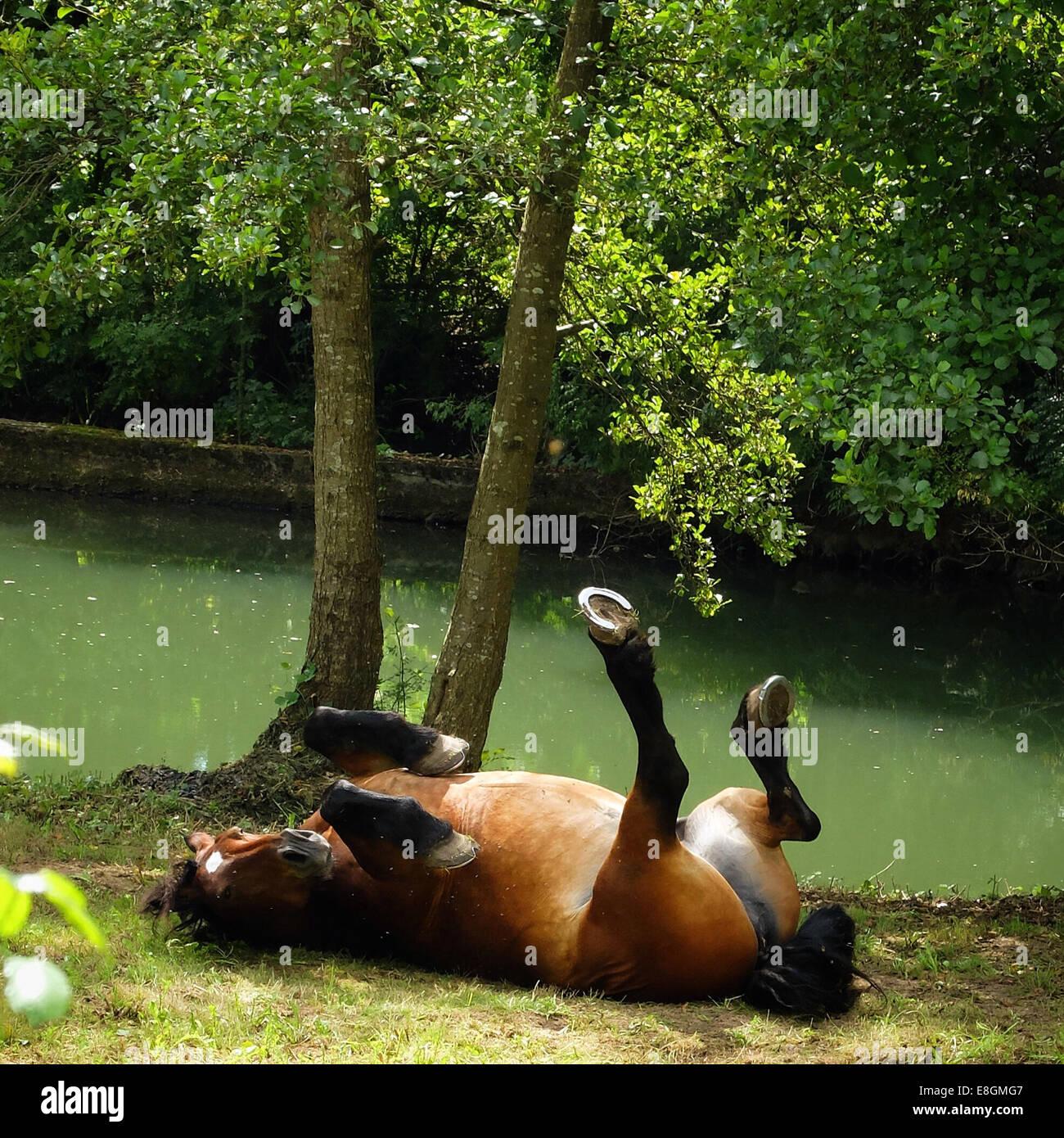 Francia, Caballo rodando hacia atrás Imagen De Stock
