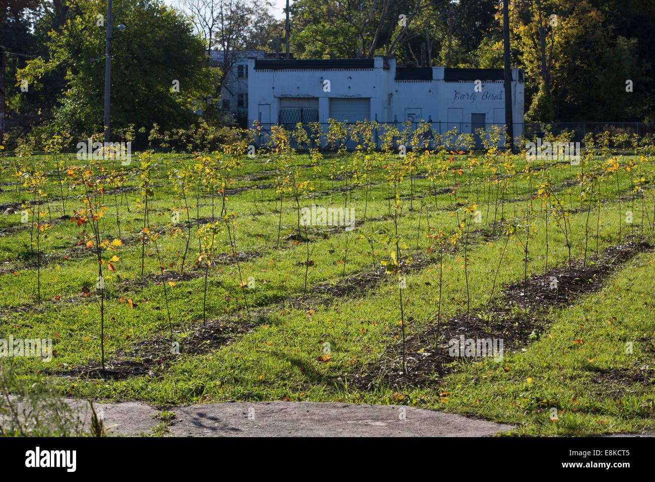 Detroit, Michigan - recién plantados árboles en bosques Hantz' urban tree farm. Foto de stock
