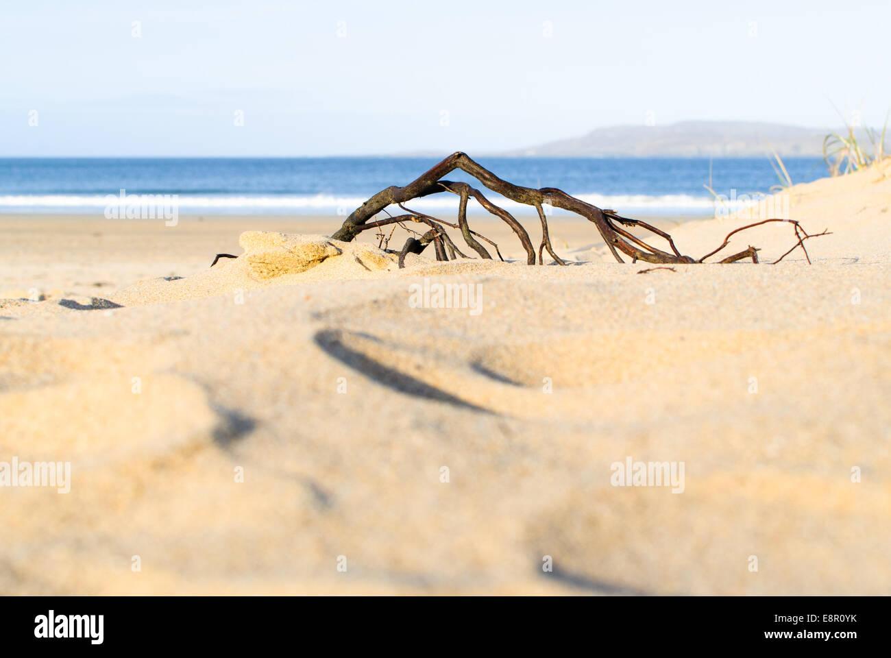 Morador en el umbral - Una raíz se aferra a Terra firma en el borde de las dunas en la playa, Dunfanaghy Killahoey, Imagen De Stock