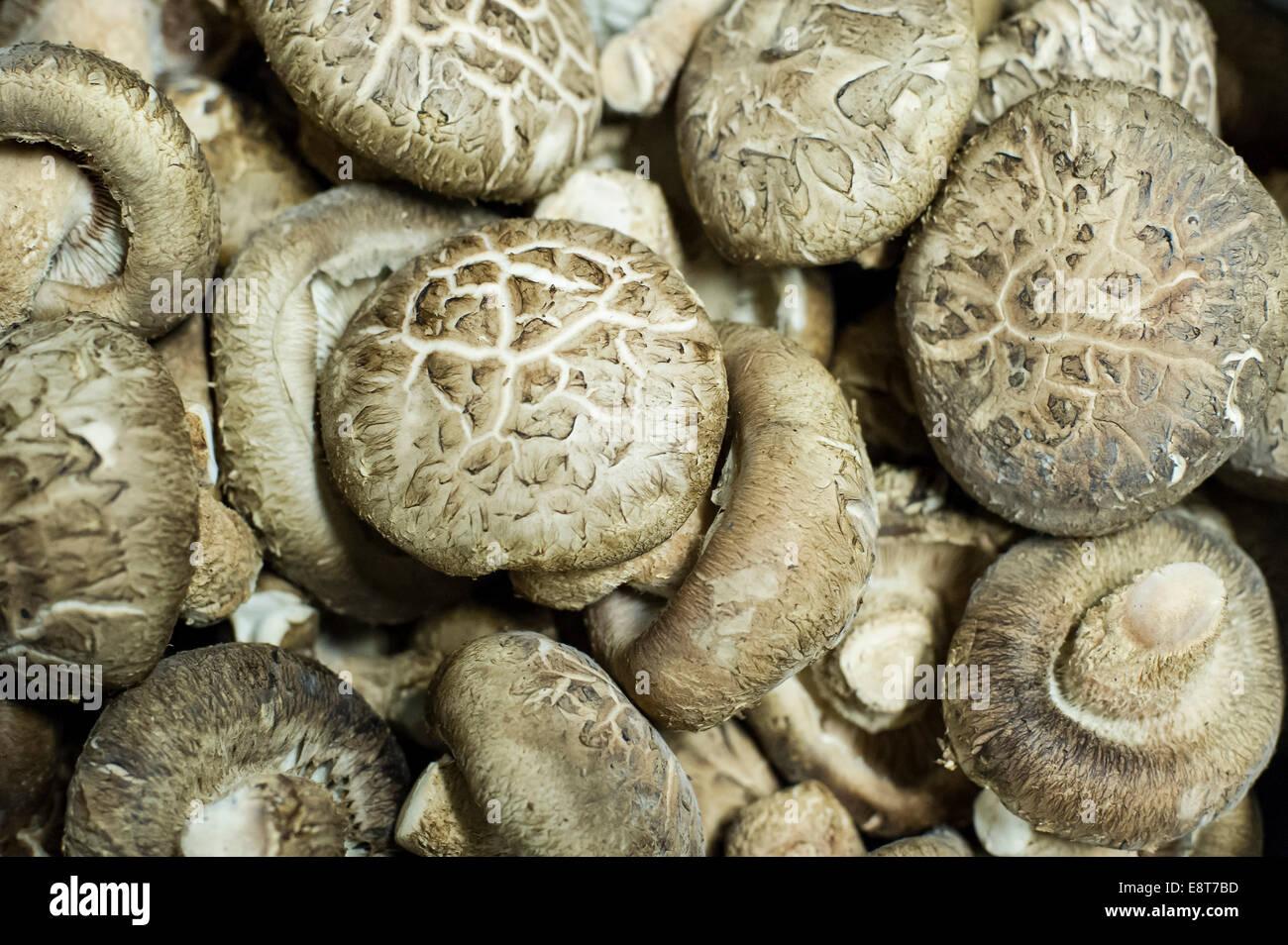 Sarcodon imbricatus escamoso (diente), setas comestibles Imagen De Stock