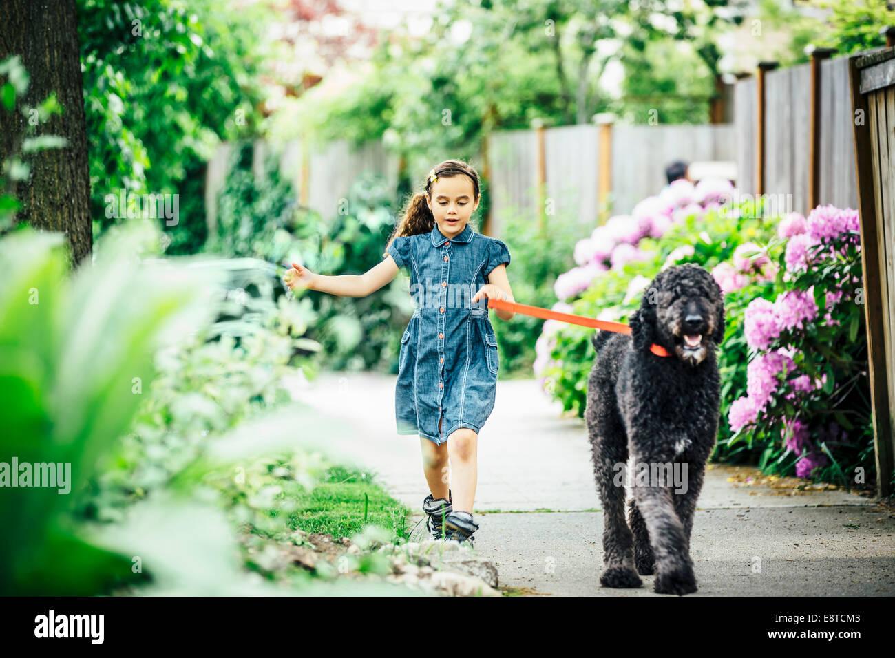 Perro de raza mixta chica caminando en la acera suburbana Foto de stock