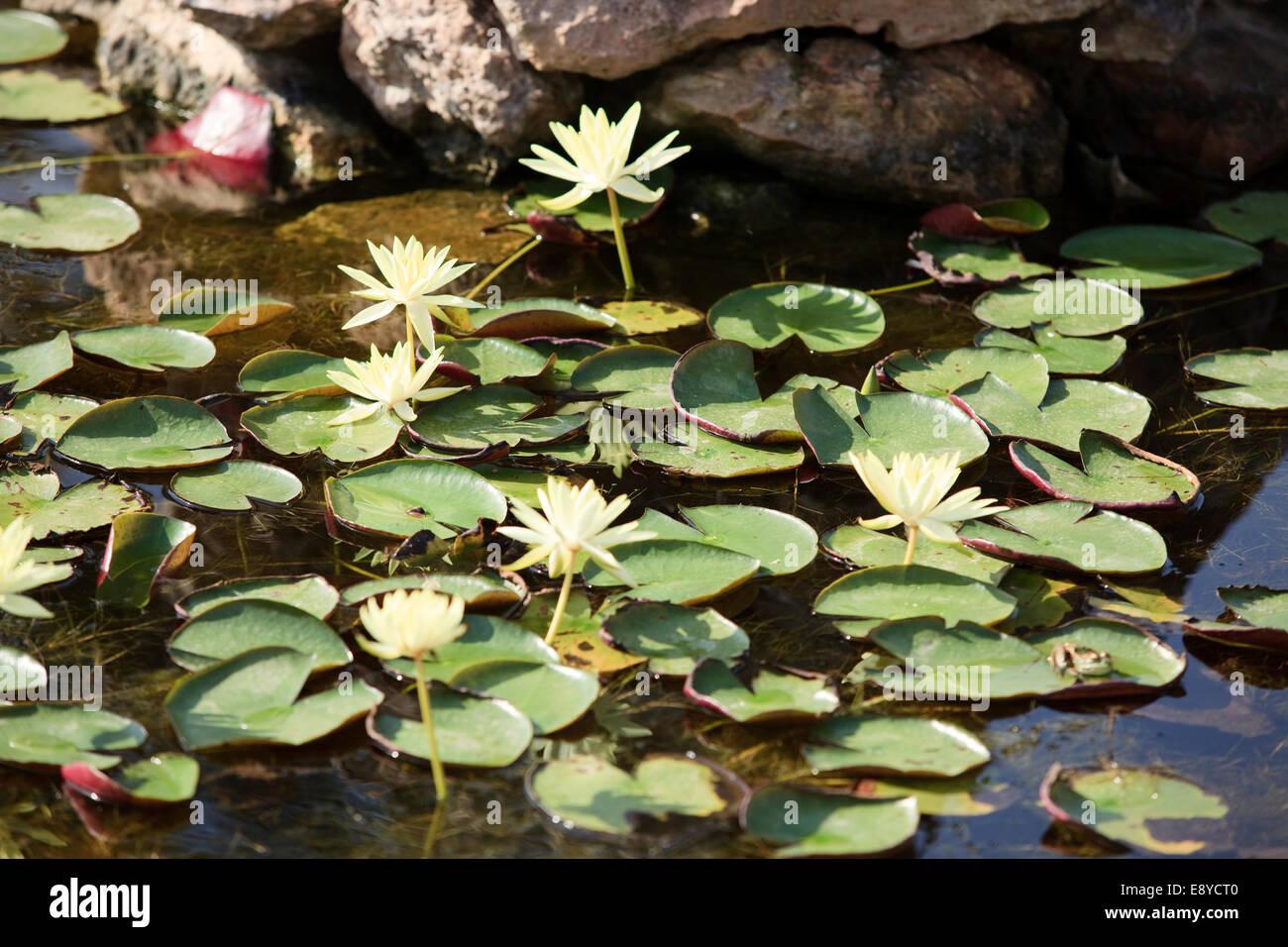 Botanicactus jardín, Jardín Botánico, Ses Salines, Mallorca, Islas Baleares, España. Foto de stock