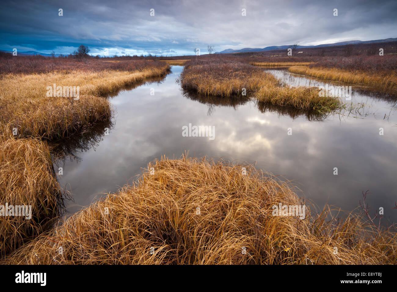El otoño en la reserva natural de Fokstumyra Dovre kommune fylke, Oppland, Noruega. Imagen De Stock