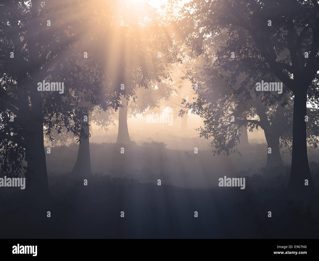 Sol en un bosque mysty Imagen De Stock