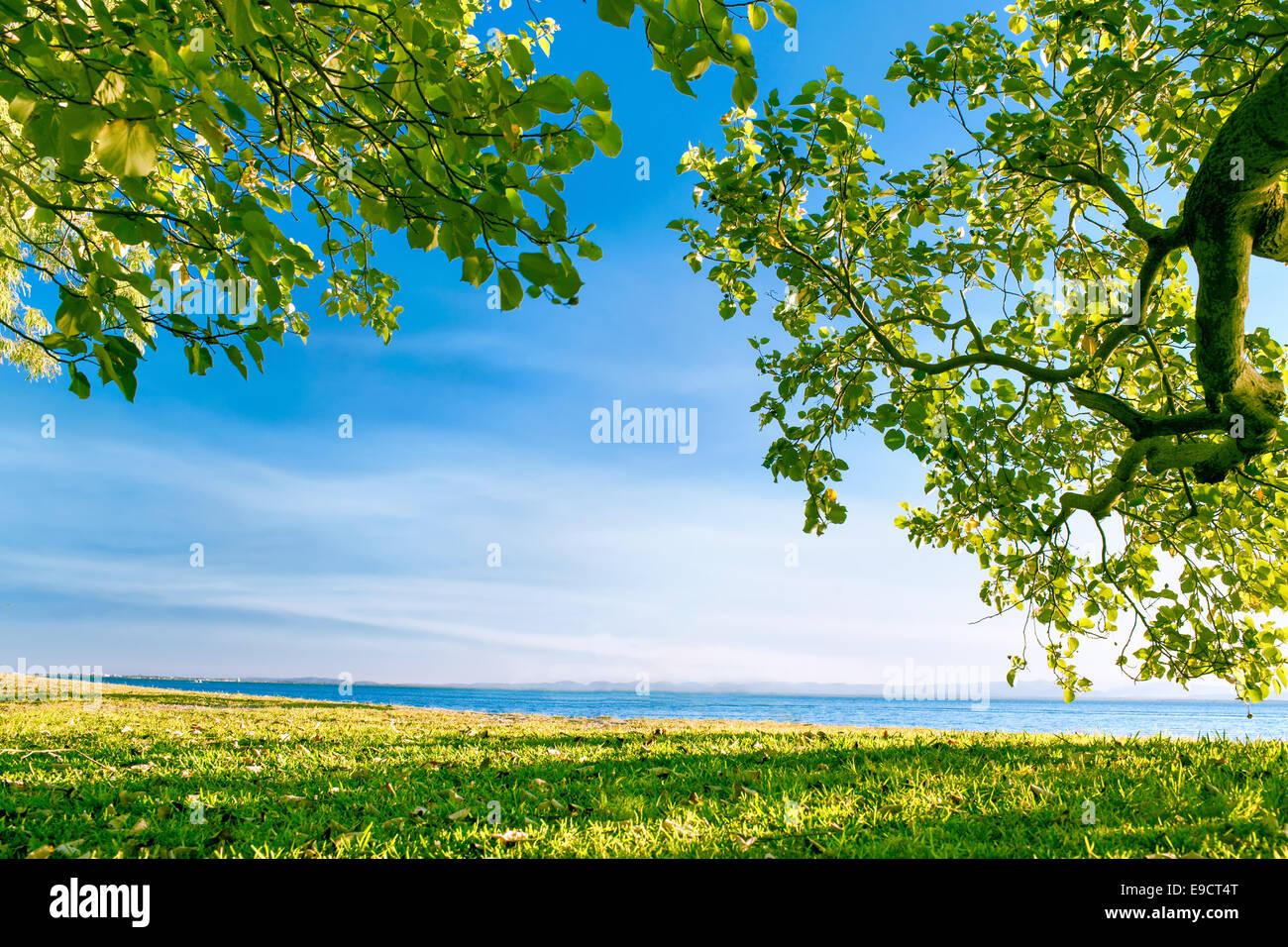 Las vistas del océano desde parque enmarcado por verdes árboles y ...