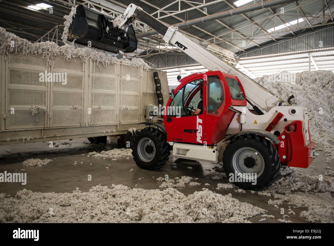 Turquía Menemen, fábrica de desmotado, procesamiento de cosecha de algodón convencional, el suministro Imagen De Stock