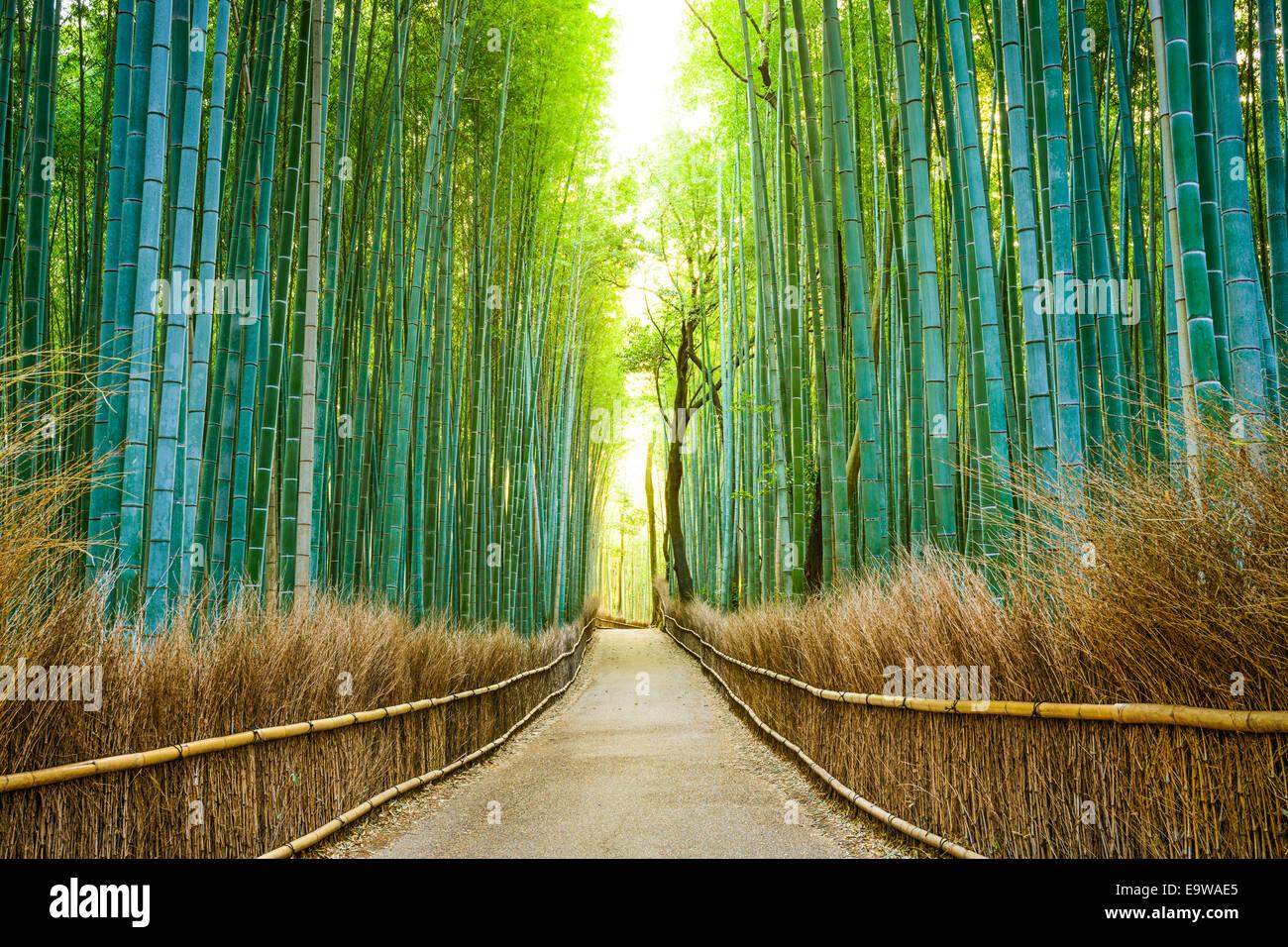 Kyoto, Japón el bosque de bambú. Imagen De Stock
