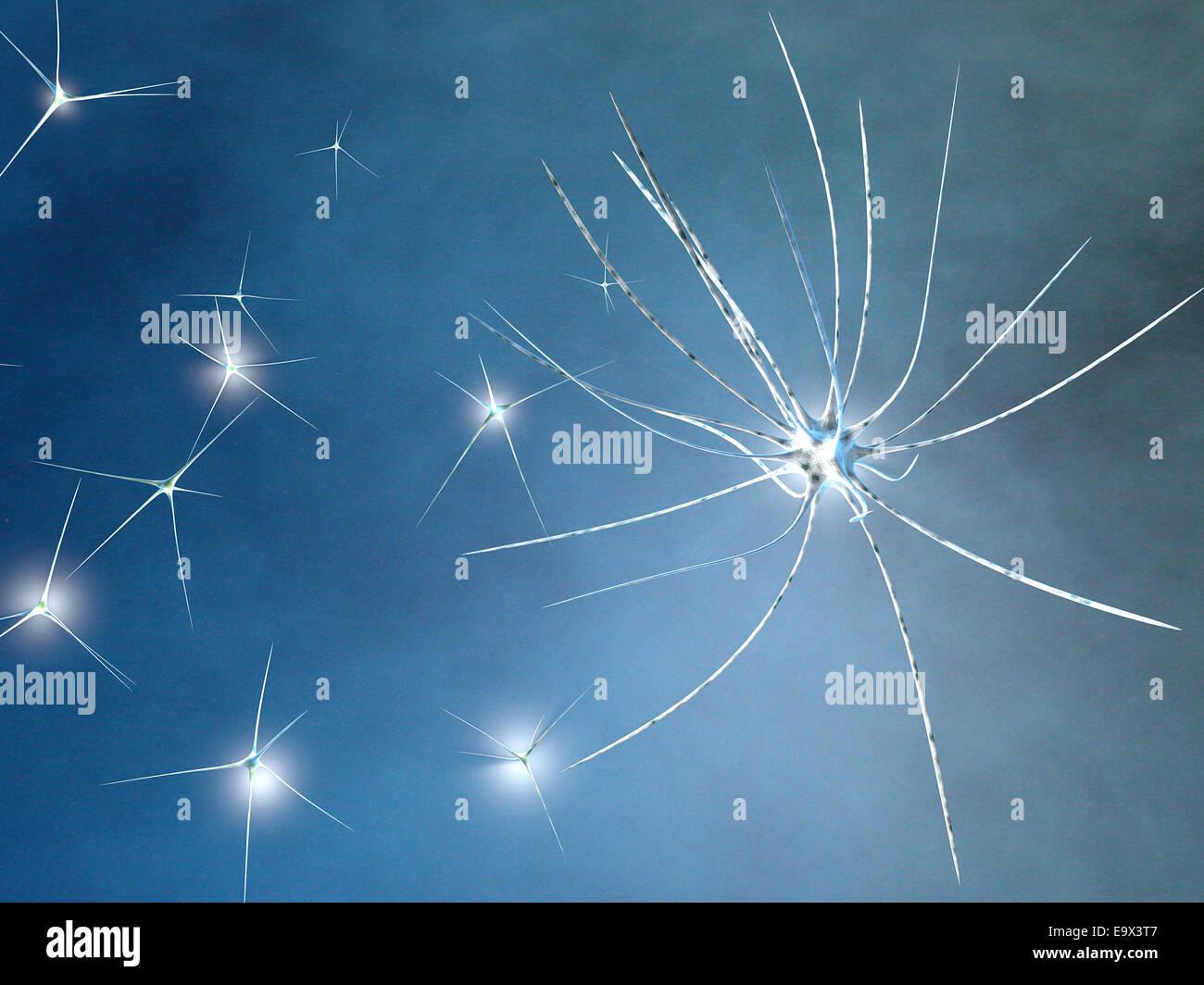Las neuronas vistos bajo el microscopio Imagen De Stock