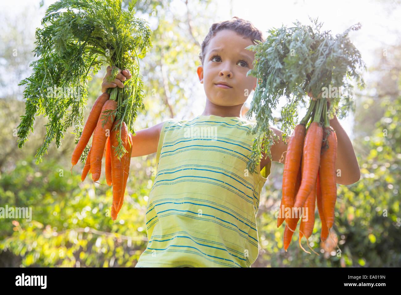 Retrato de niño en jardín sosteniendo manojos de zanahorias Foto de stock