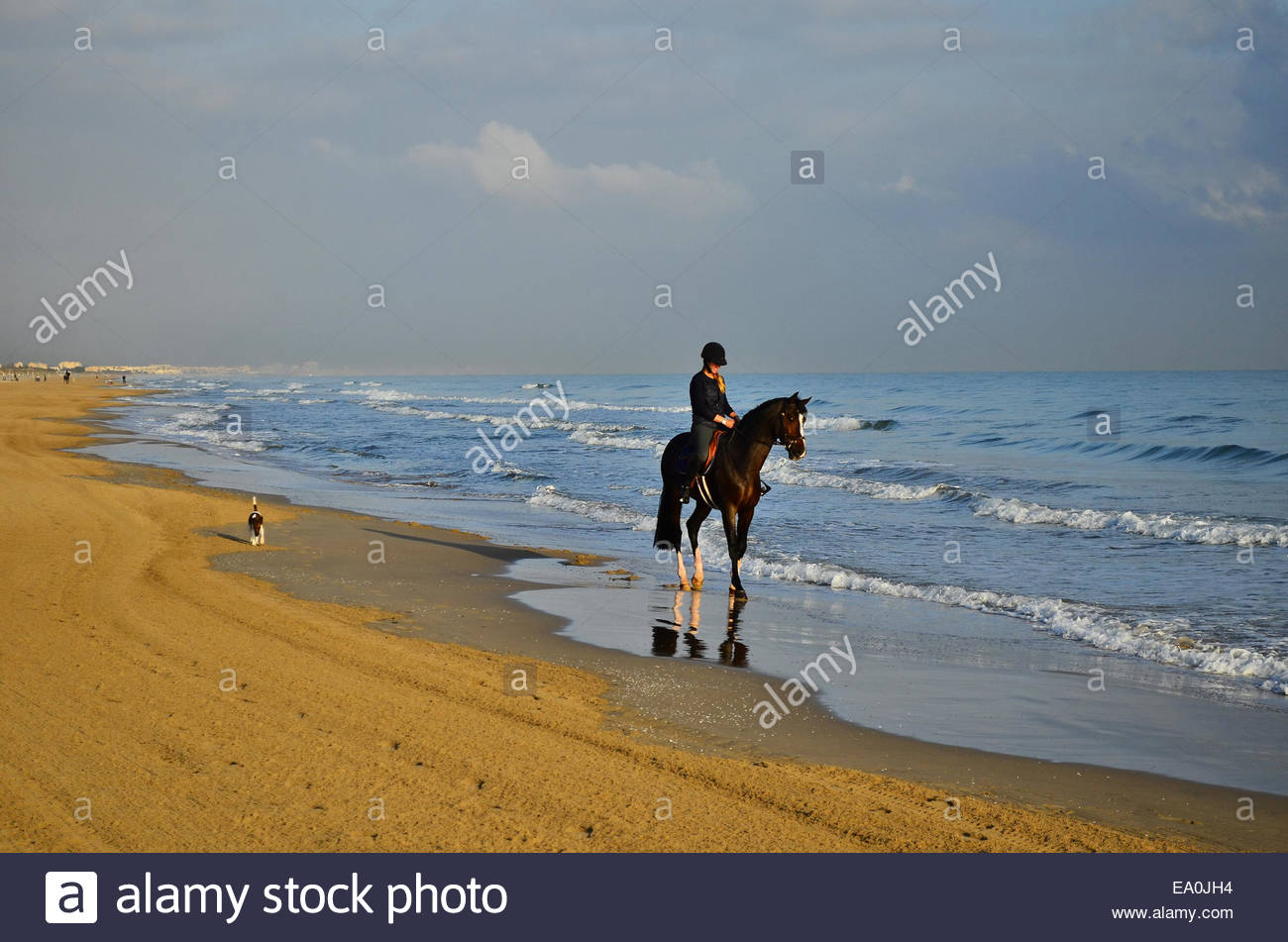 Joven Jinete playa de Oliva provincia de Valencia España Europa Imagen De Stock