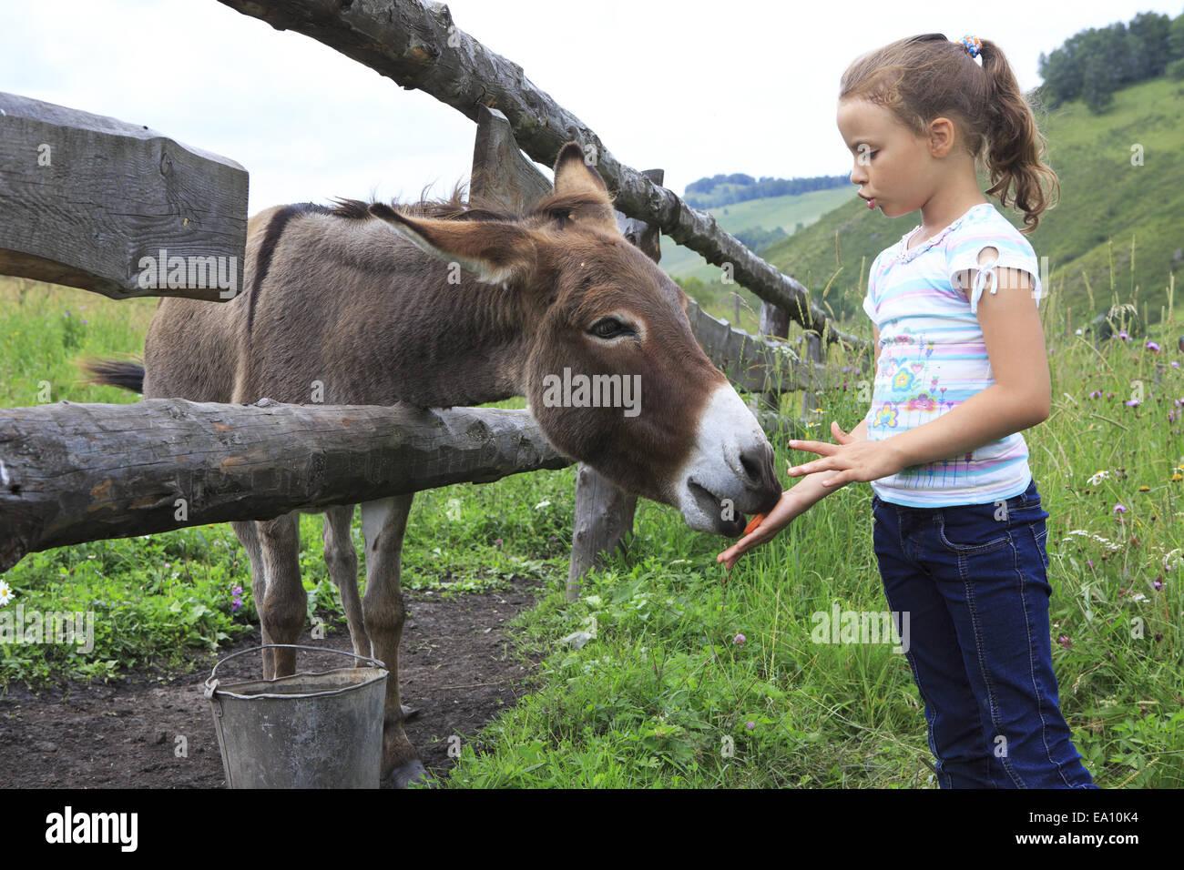 Poco Chica Alimentando Burro Zanahoria Fotografia De Stock Alamy La imagen corresponde a poner una zanahoria en un palo, para que el burro haga girar la. https www alamy es foto poco chica alimentando burro zanahoria 75010520 html
