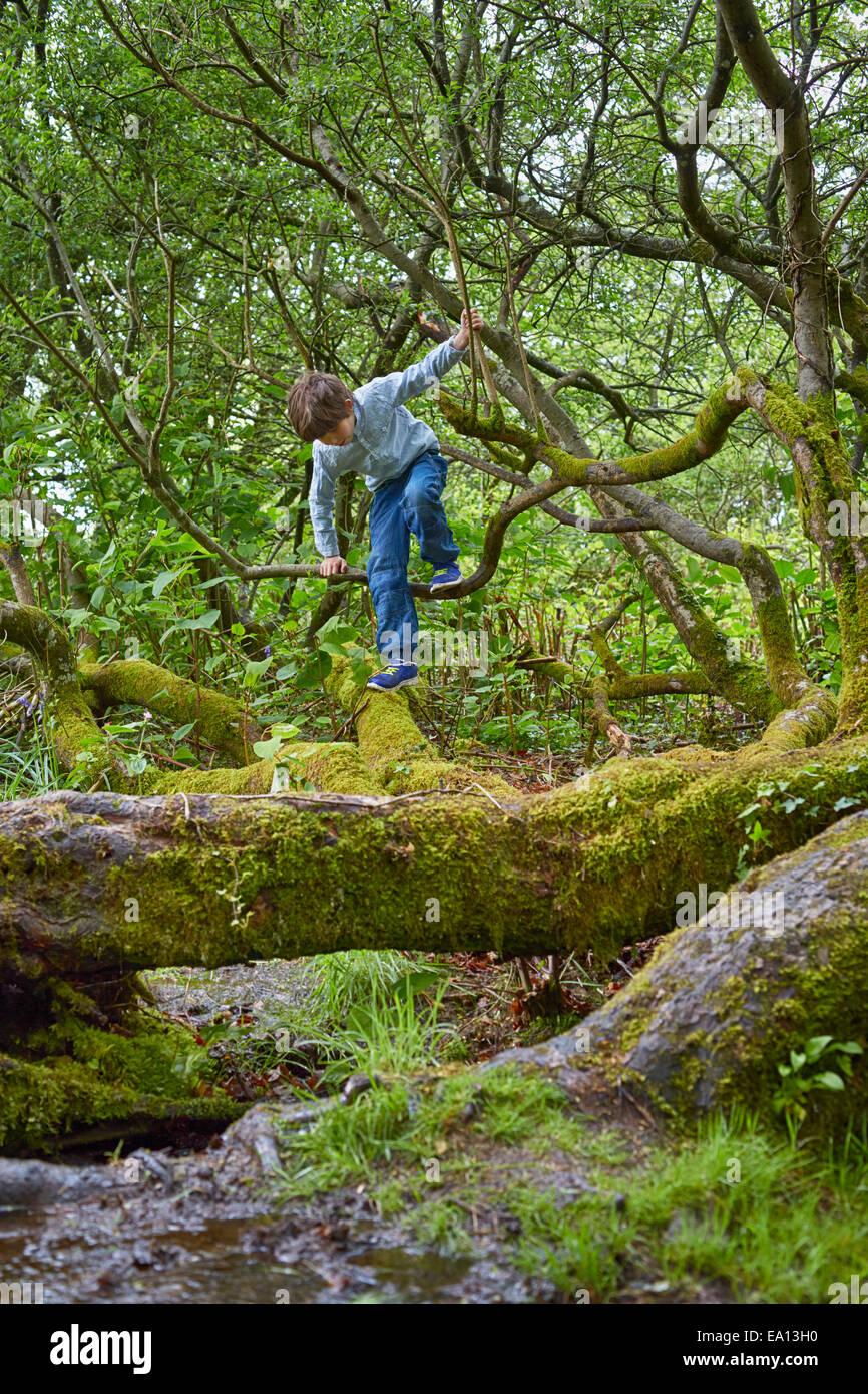 Boy escalada en árboles en bosques Imagen De Stock