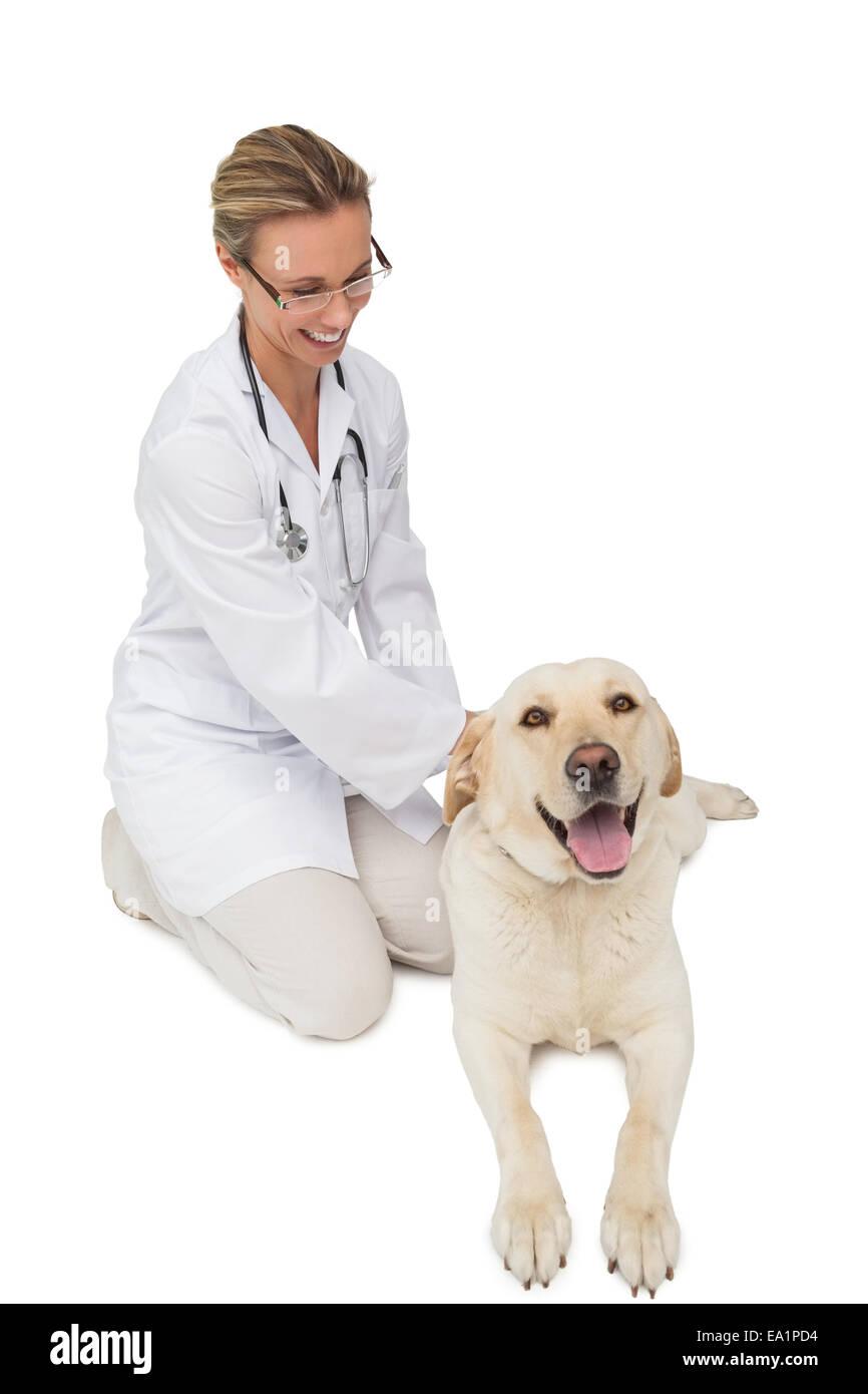 Feliz vet acariciándole amarillo perro labrador Imagen De Stock