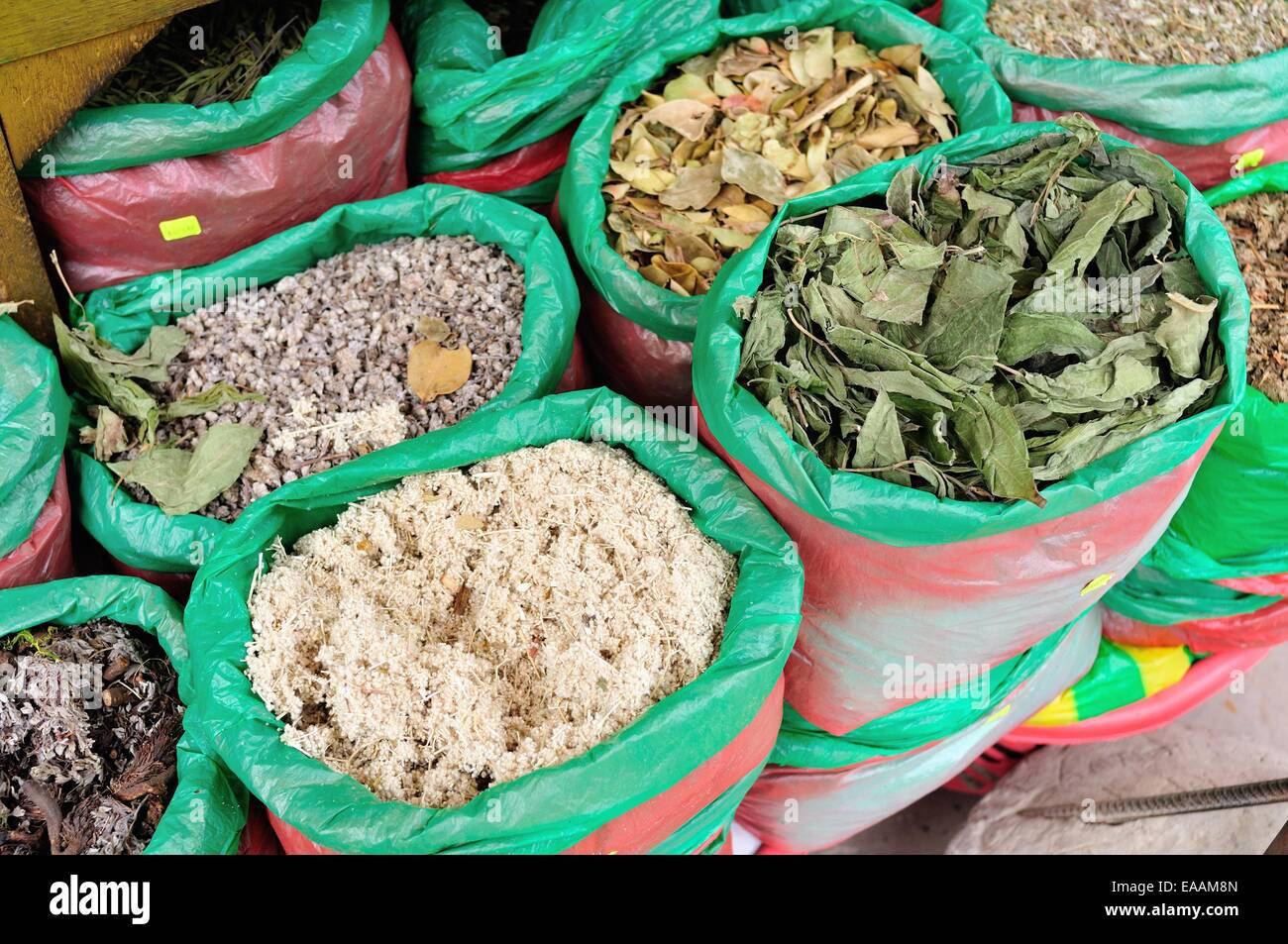 Plantas medicinales flor blanca , eucalipto - Mercado de Tumbes. Departamento de Tumbes .PERÚ Foto de stock