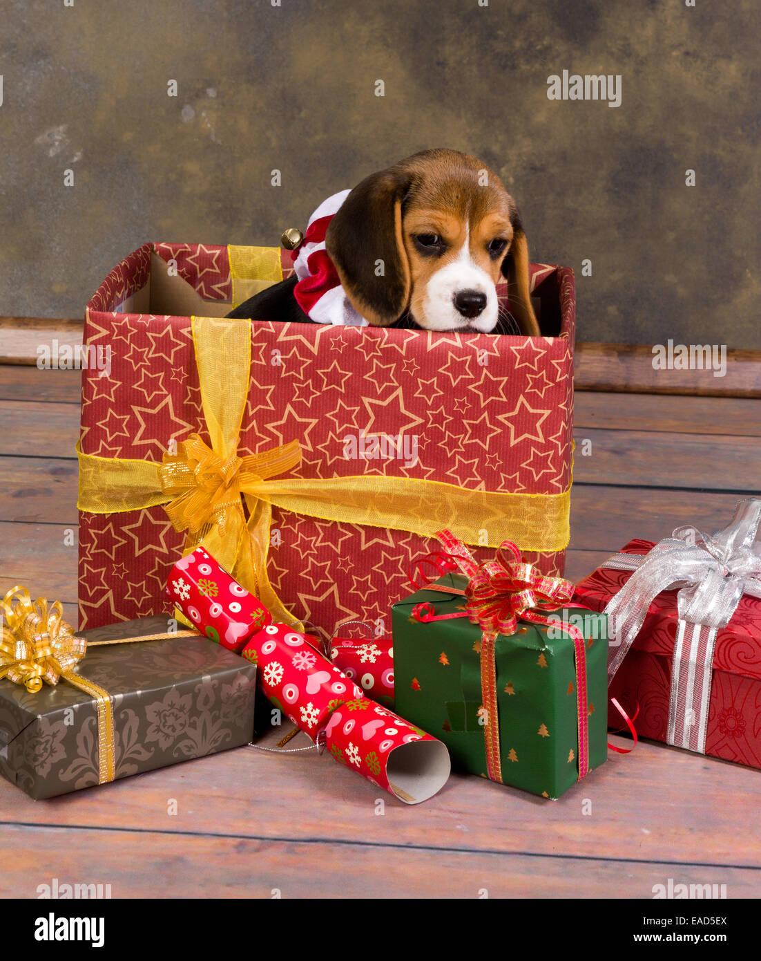 Resultado de imagen para beagle navidad