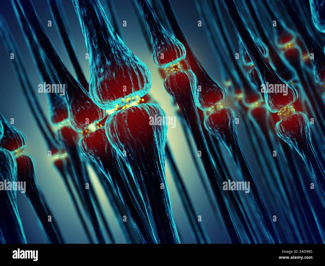 La transmisión sináptica , Sinapsis , el sistema nervioso humano Imagen De Stock