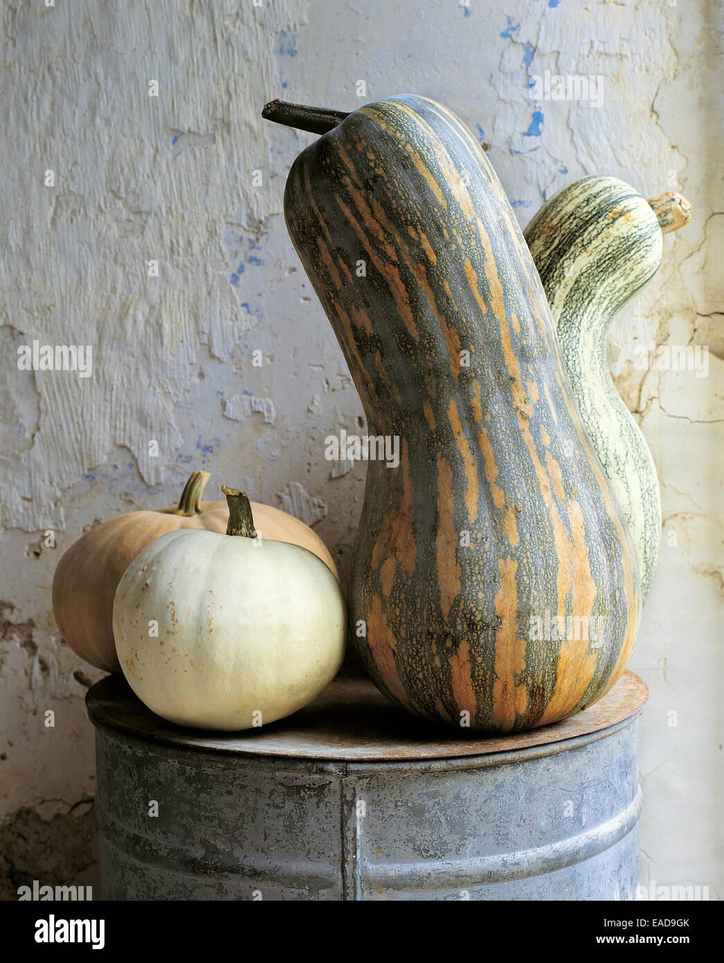 Varias pistas de squash y calabazas en la granja Imagen De Stock