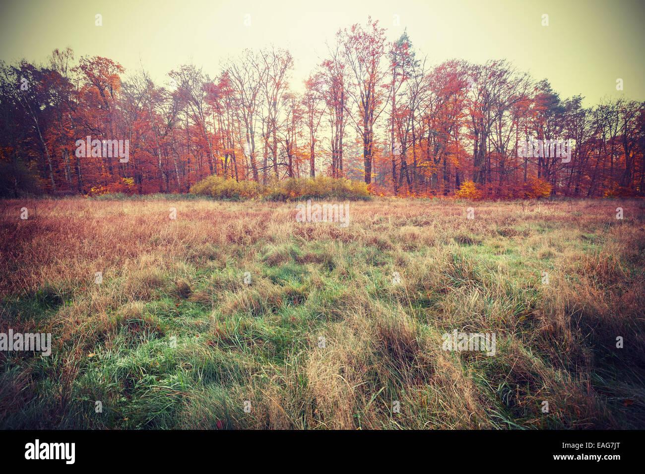 Vintage fotos filtradas de un campo de otoño. Imagen De Stock