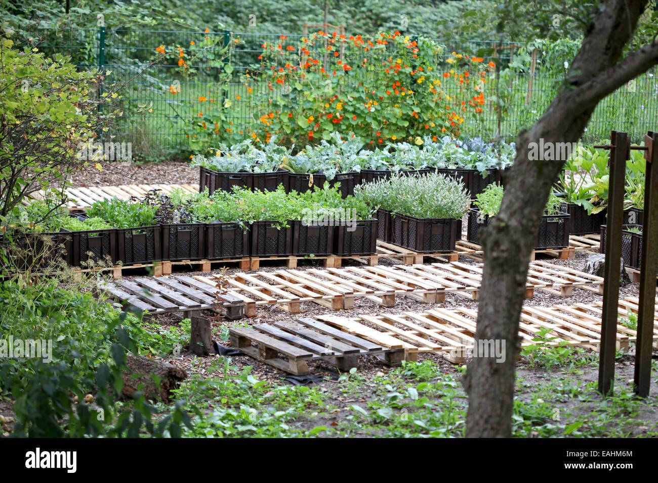 Las verduras cultivadas en planta de cajas en un proyecto de horticultura urbana en Alemania Foto de stock