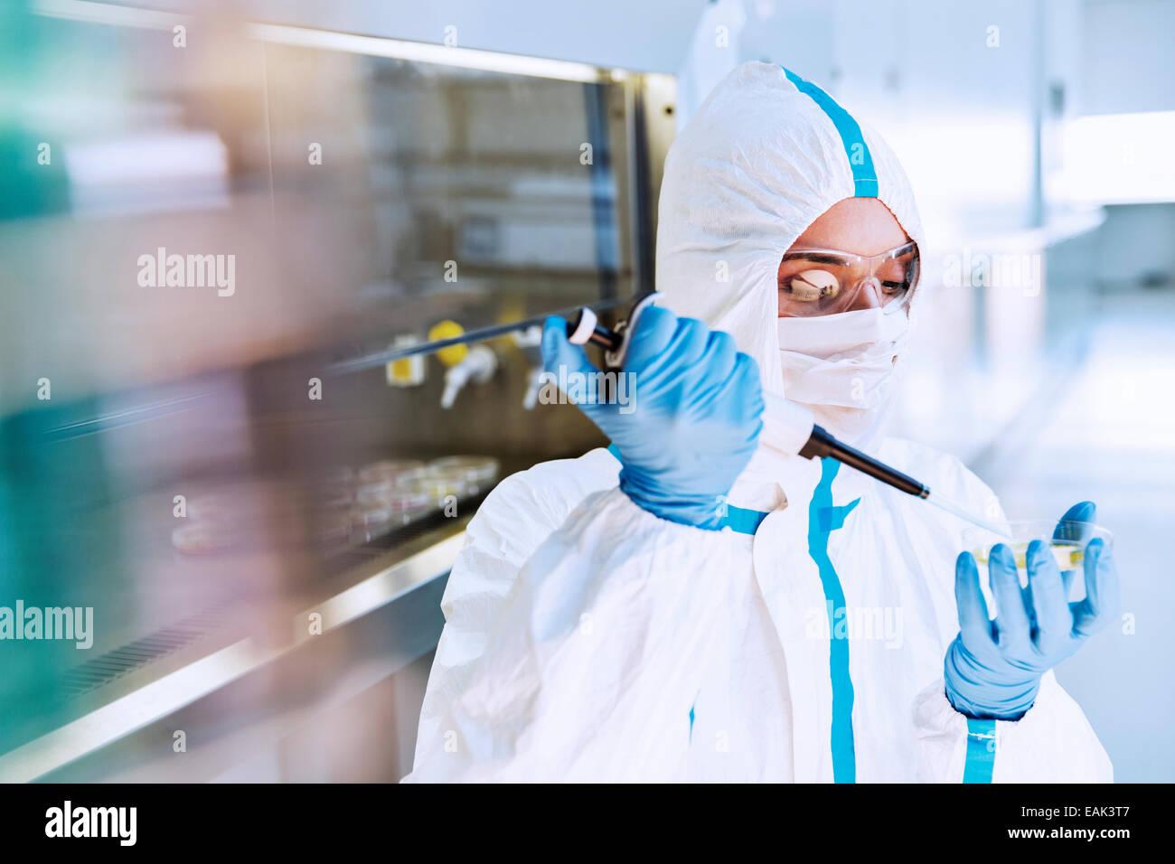 Scientist en traje limpio el pipeteo de muestra en placa de Petri en el laboratorio Imagen De Stock