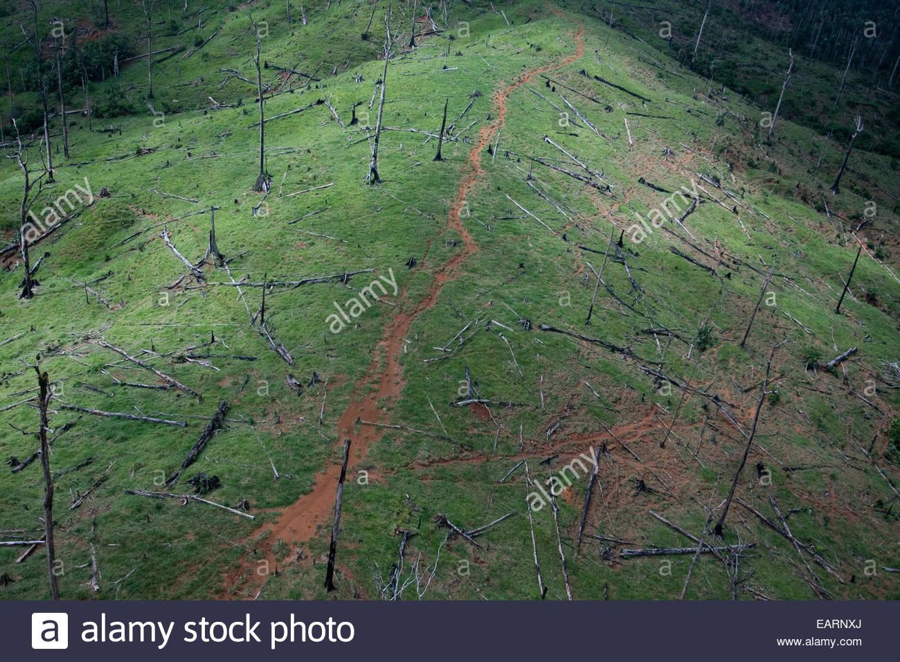 La deforestación de las laderas en Guatemala Imagen De Stock
