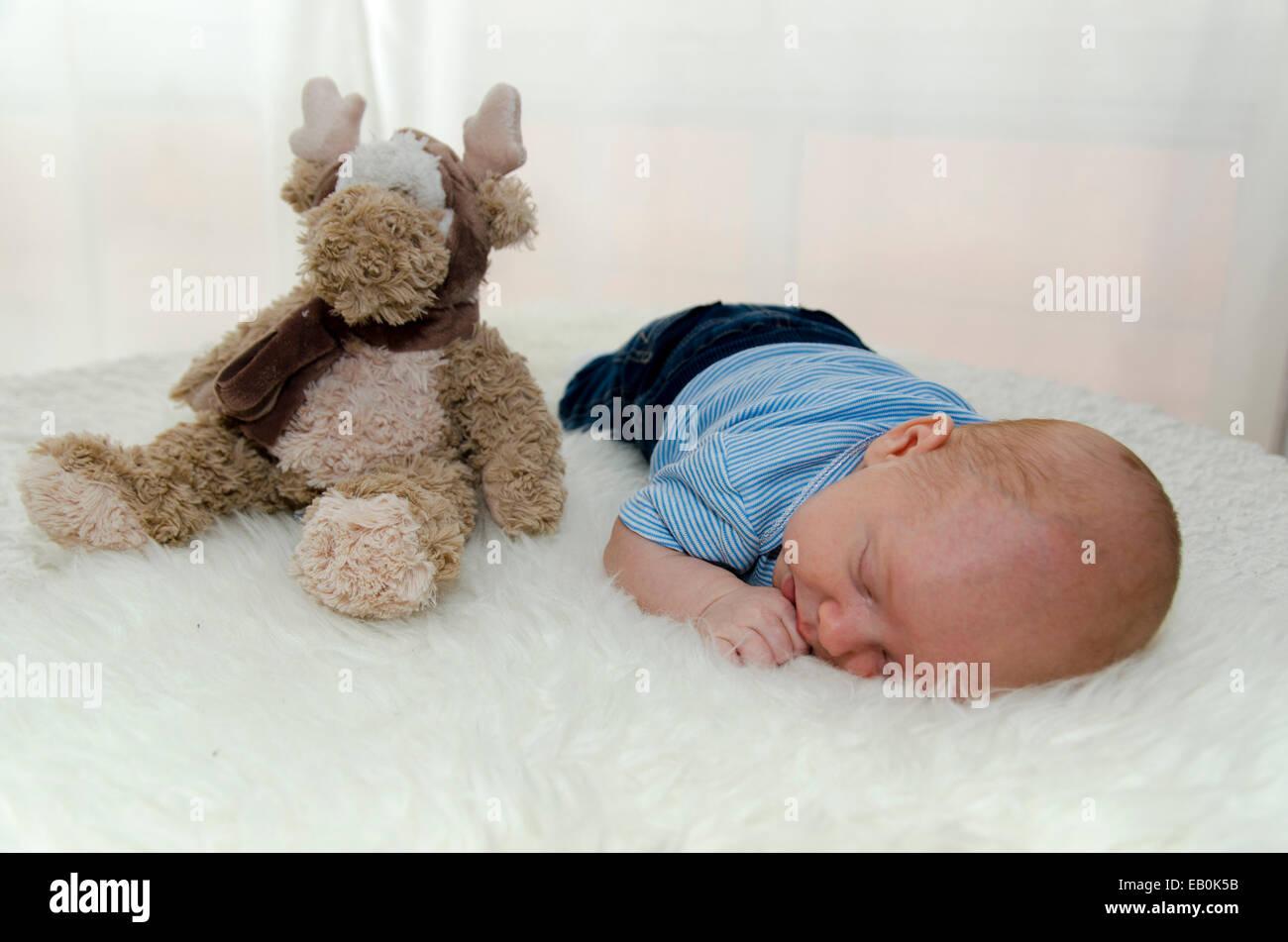 Cute Little Moose Imágenes De Stock   Cute Little Moose Fotos De ... 55fd1ebdba4