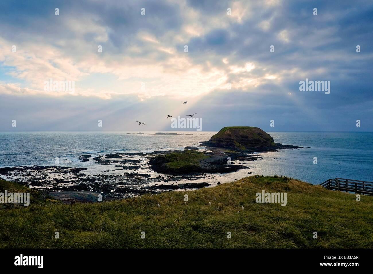 Australia, Phillip Island Nature Park, bajíos rocosos visto desde la orilla de hierba Imagen De Stock