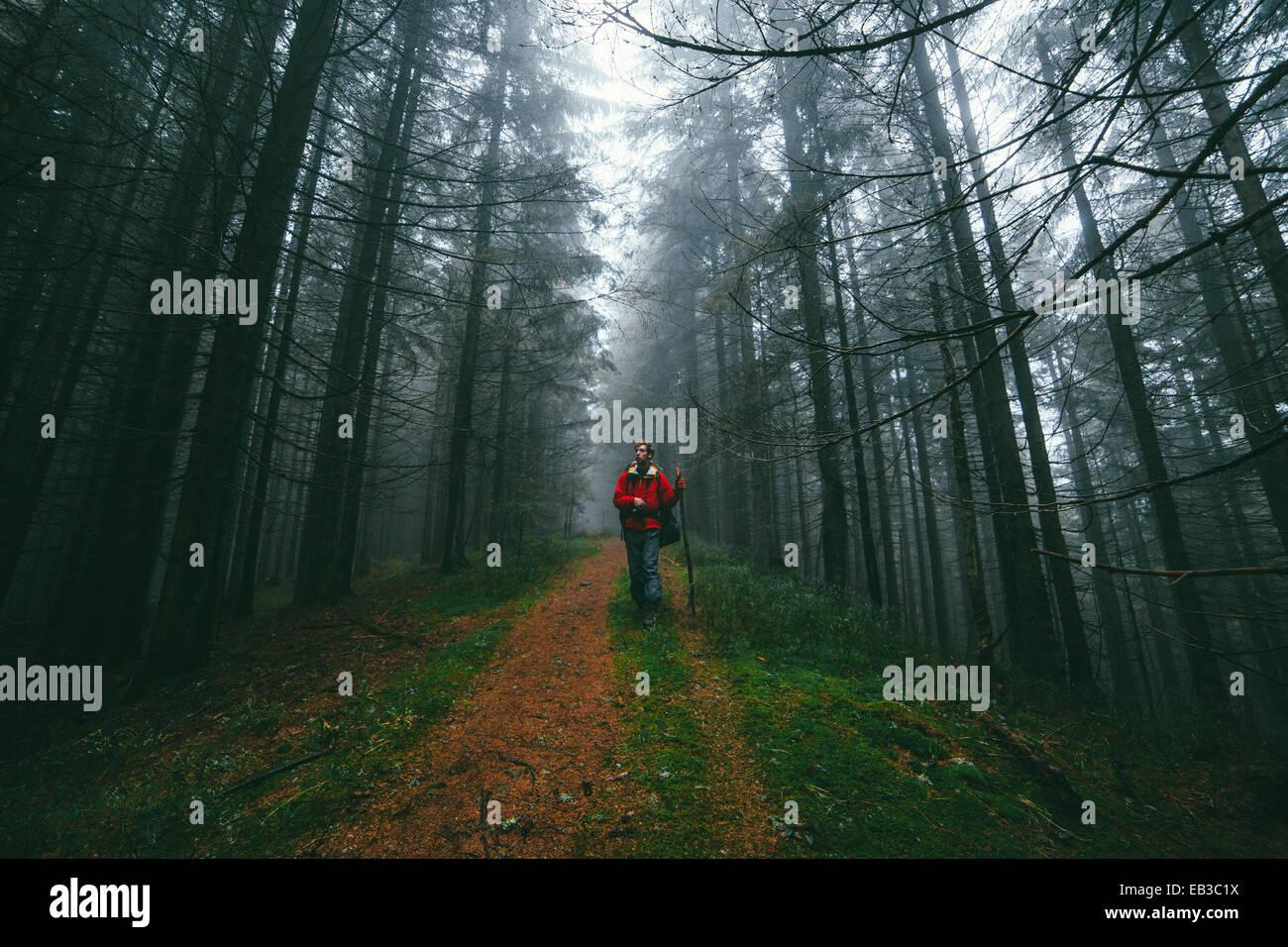 Excursionista en el bosque Imagen De Stock