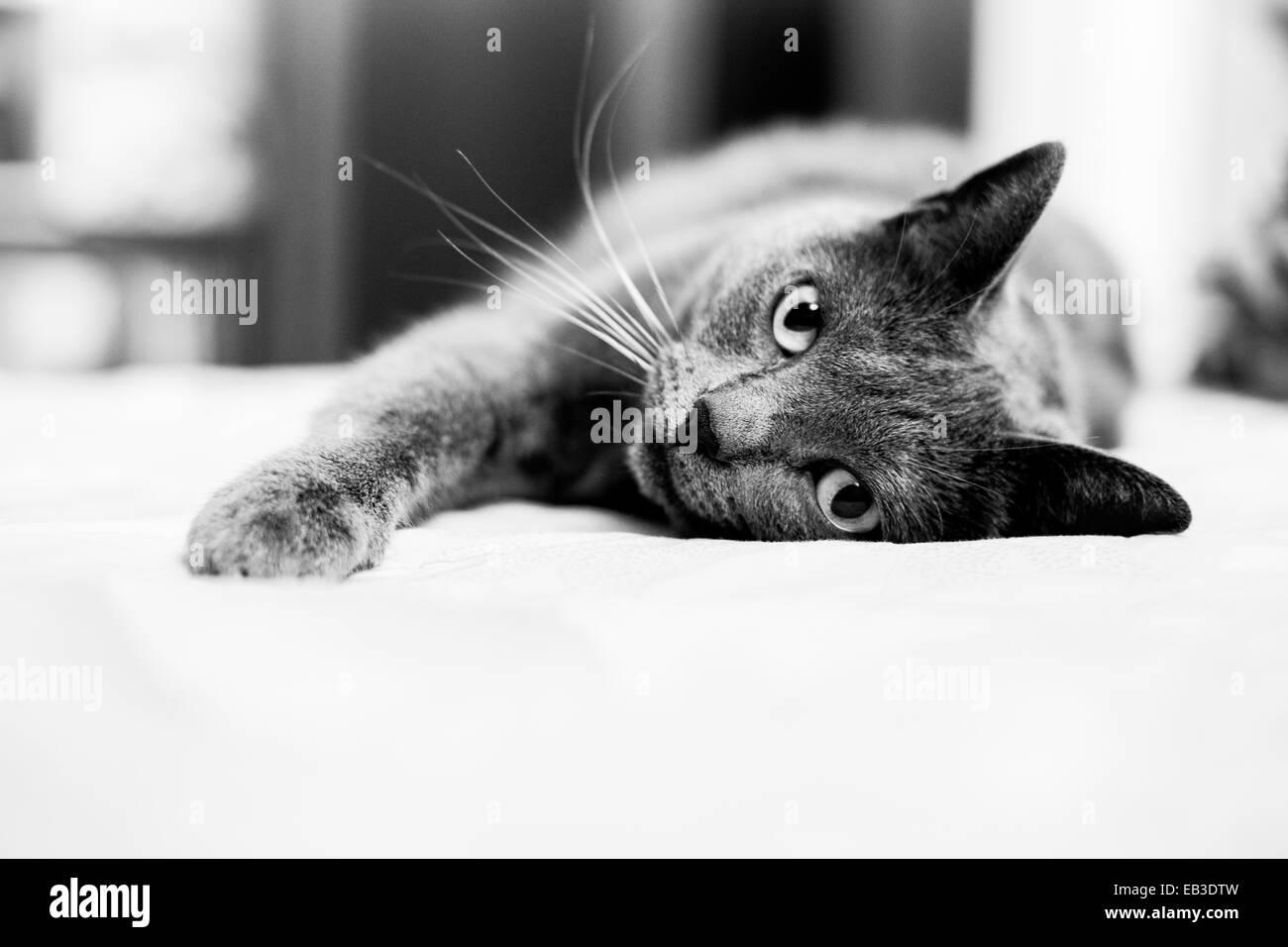 Gato tumbado en el sofá Imagen De Stock