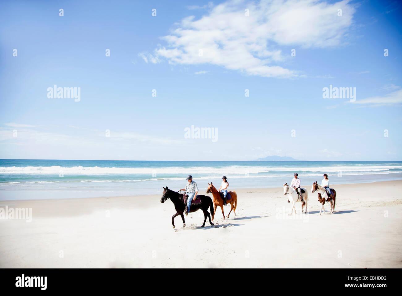 Equitación, Pakiri Beach, Auckland, Nueva Zelanda Foto de stock