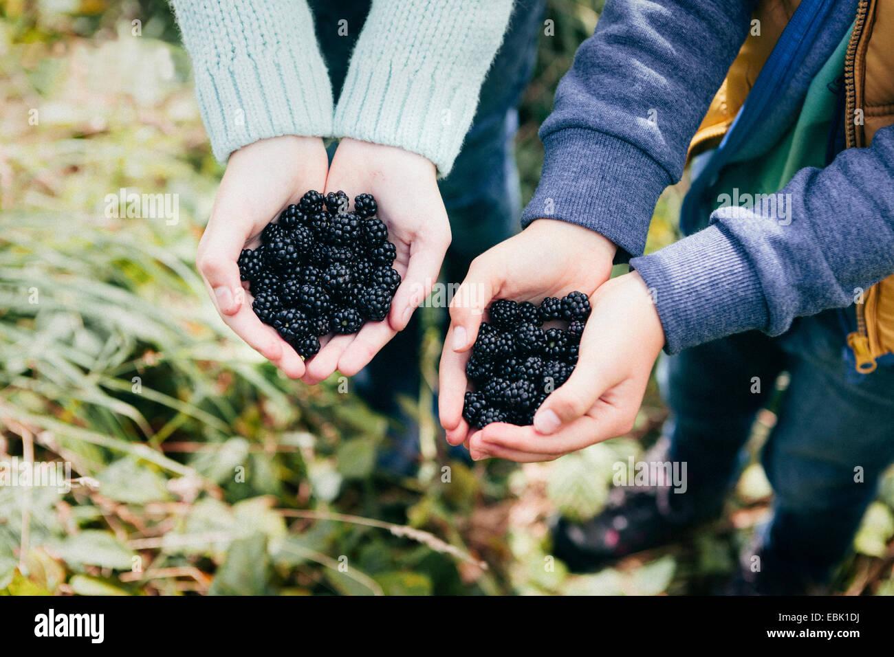 Dos personas sosteniendo moras en manos ahuecados Imagen De Stock