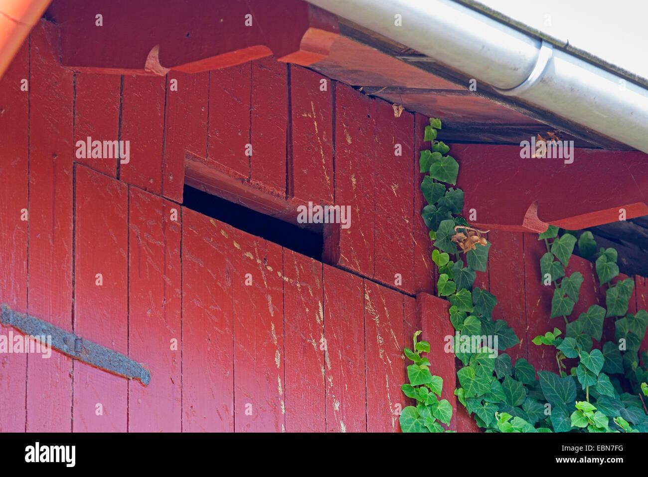 Apertura a la buhardilla en un cobertizo, cavidades huecas como escondite para los animales, Alemania Imagen De Stock