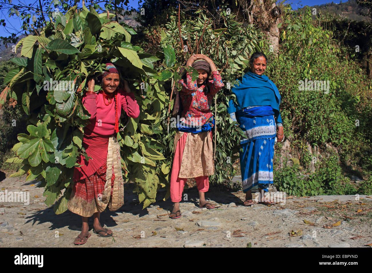 Las mujeres portadoras de un montón de alimento para las cabezas de ganado doméstico, Nepal, Pokhara Kathmandutal Imagen De Stock