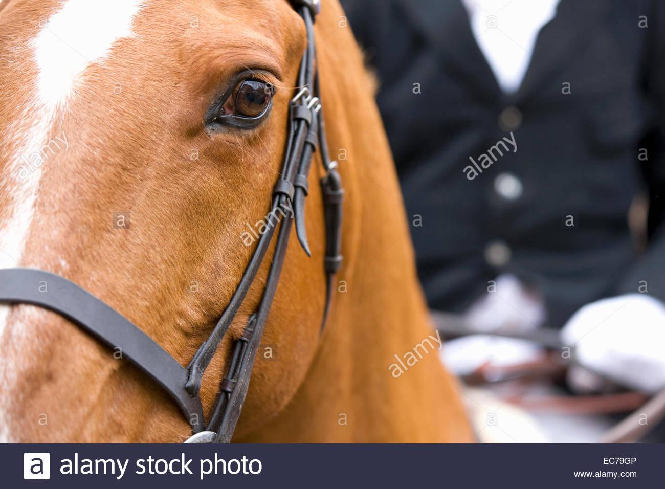 Cerca de la cabeza de un caballo con jinete en segundo plano. Imagen De Stock