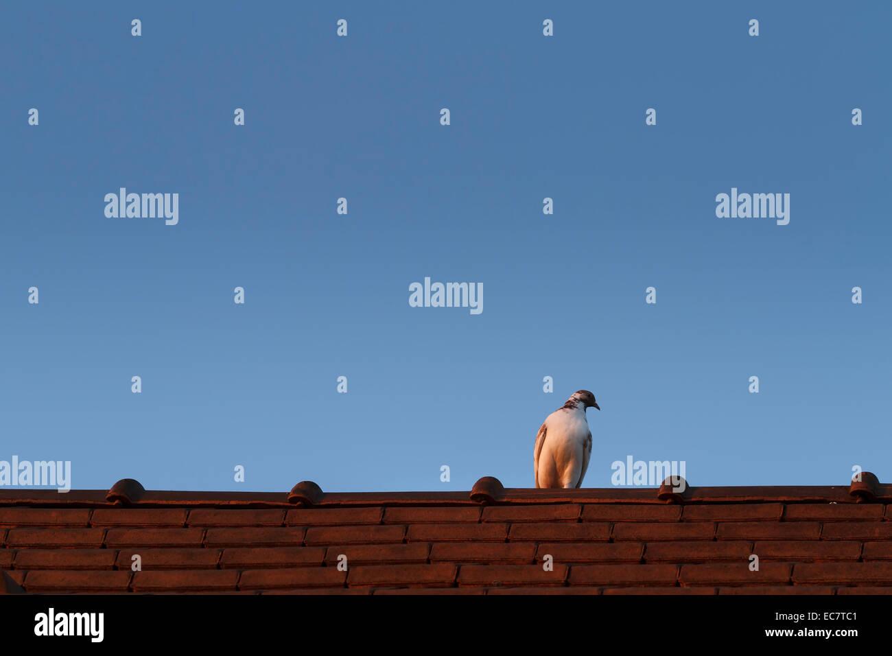 pájaro en el techo Imagen De Stock