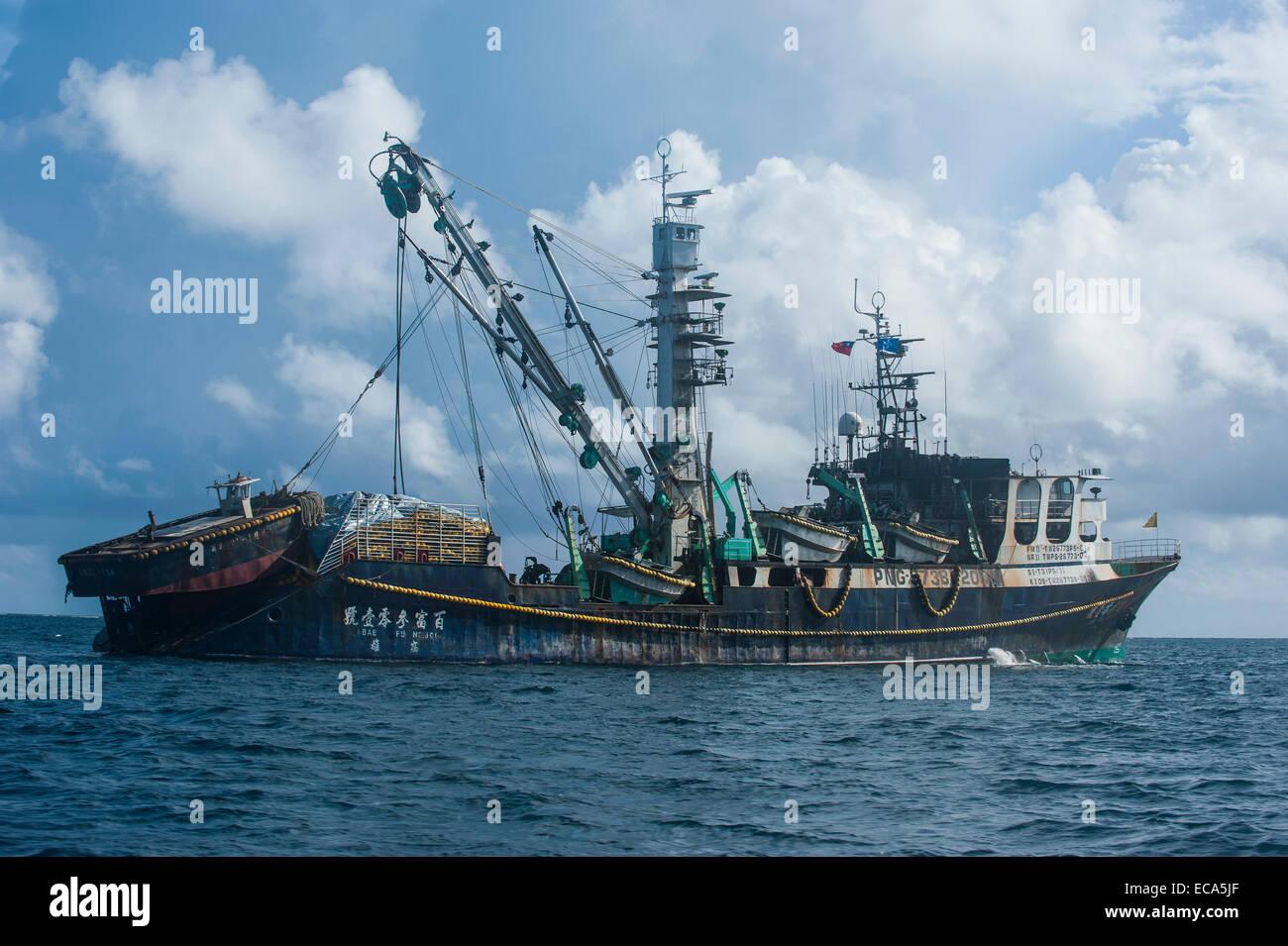 Pesca de arrastre chino, Pohnpei, Micronesia Foto de stock