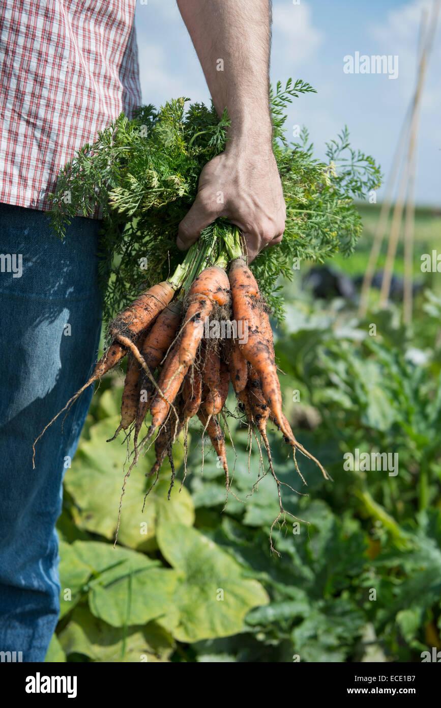 Creciente autosuficiencia propias verduras Imagen De Stock
