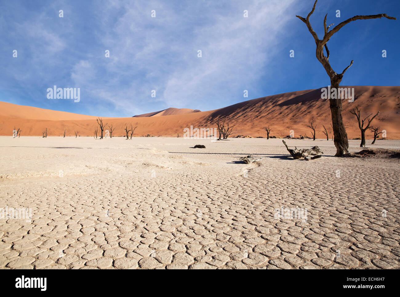 Los árboles muertos y la tierra reseca, Deadvlei, Sossusvlei, Namibia Imagen De Stock