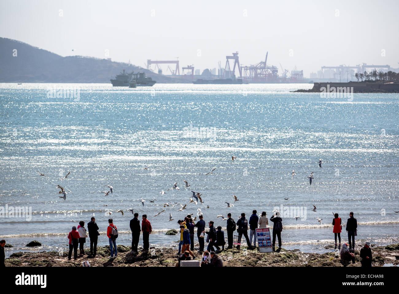 ea2f829455a93 Los turistas alimentando a las gaviotas en la playa en el puerto de Qingdao  Imagen De
